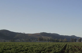Organic FarmingNutrilite Farming Practices Amway.jpg