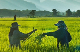 Mobile Banner 1 (360 x 360) - Agriculture.png